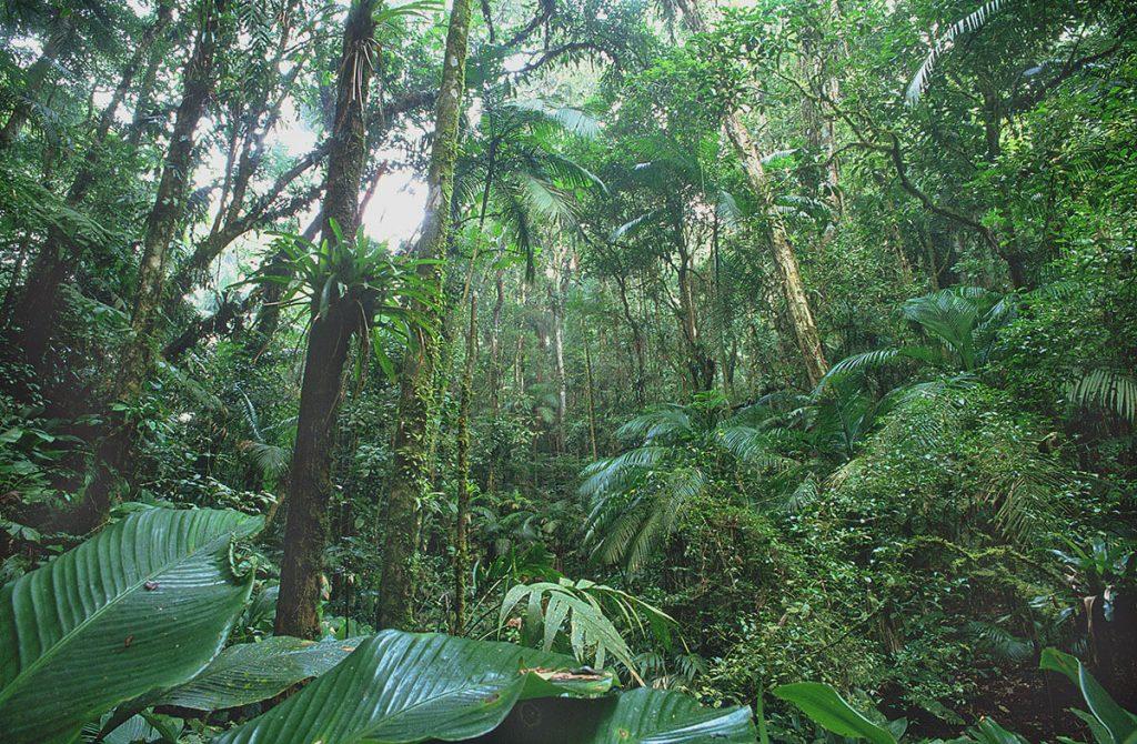 Infelizmente restam apenas 12% da Mata Atlântica original no Brasil. Na cidade de São Paulo, entretanto, 17% de toda a floresta nativa original ainda está intacta.