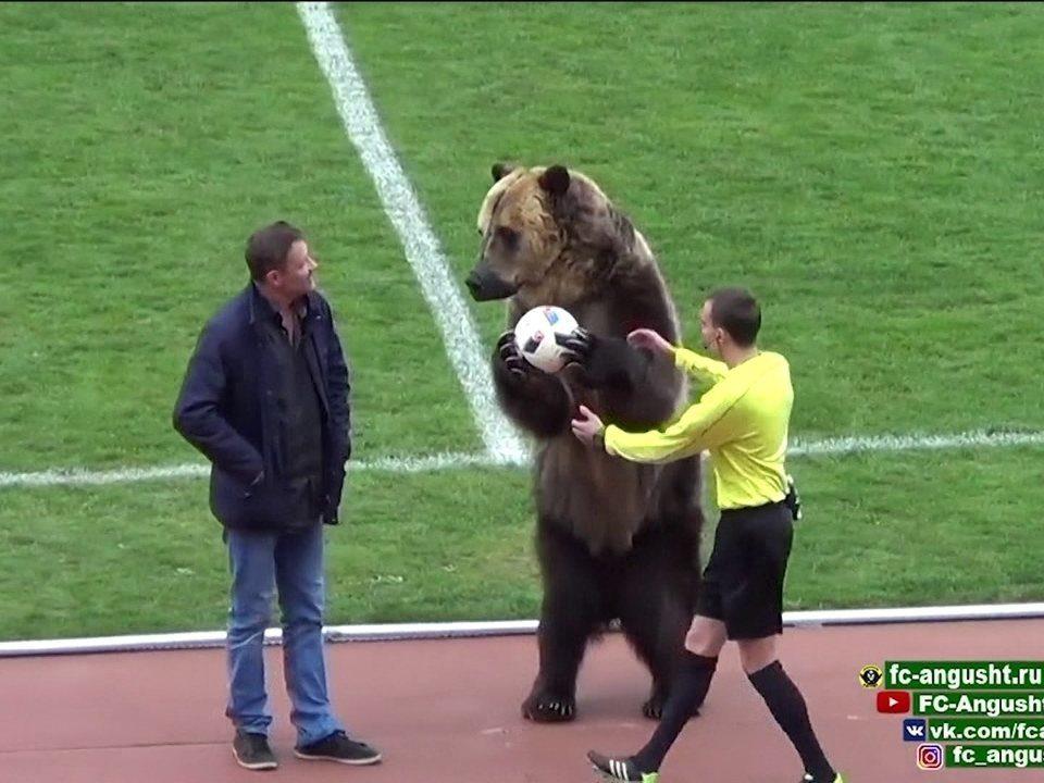 O locutor do estádio, que narrava o que se passava, afirmou que o animal estará presente na abertura da Copa do Mundo, no próximo dia 14 de julho, antes da partida entre a Rússia e a seleção da Arábia Saudita.